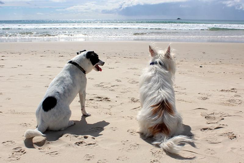 salento-spiagge-animali-ammessi