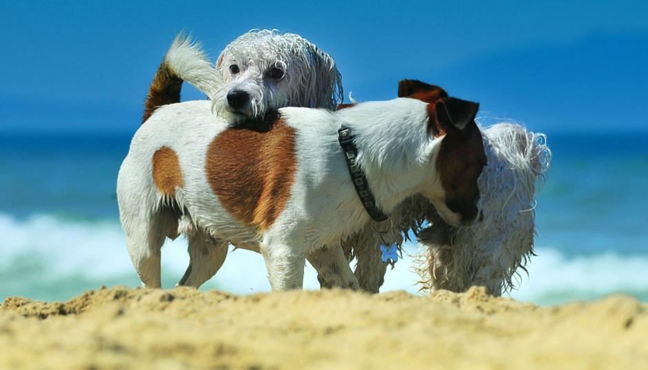 spiaggia per cani snoopy