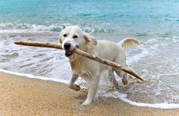 salento spiagge per cani italia
